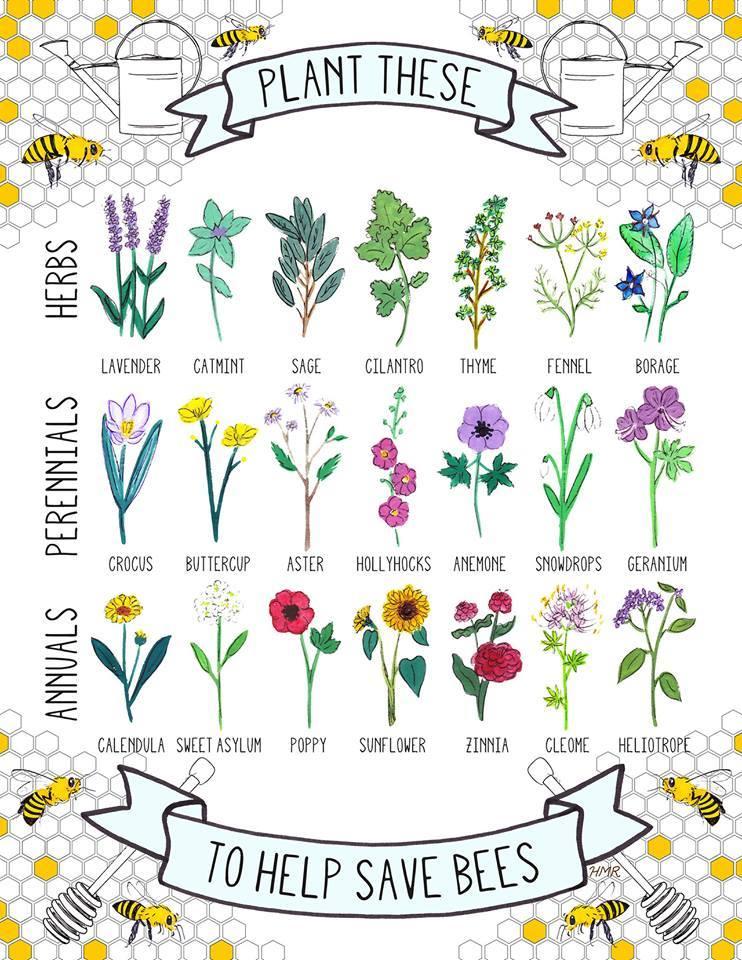 bee-friendly-plants