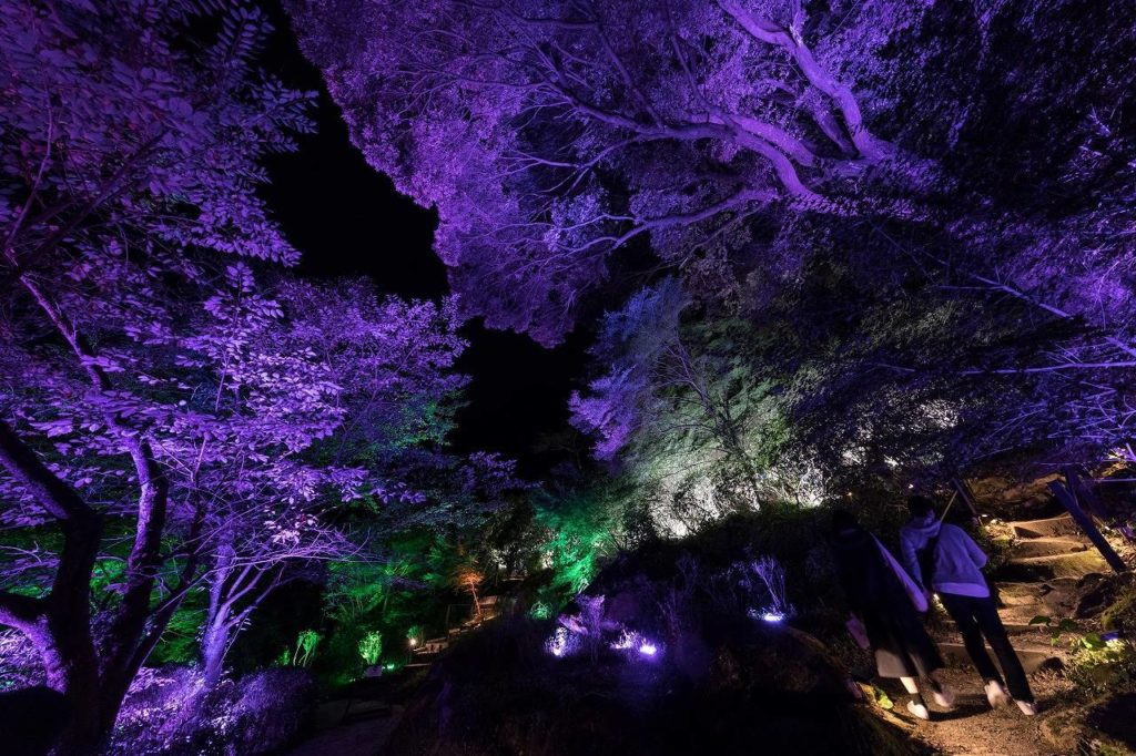 teamLab X earth music & ecology a forest where gods live
